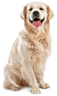 Hvordan man passer sin hunds hud og pels
