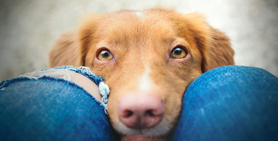 Som hundeejer kan du gøre meget for at give din hund de bedste forudsætninger for at forebygge urinvejsinfektioner. En metode er at bruge tranebær.