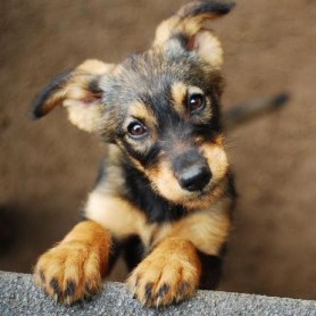 Separationsangst hos hunde