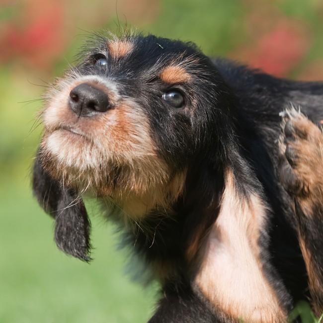 Hvordan slippe man af med hundelopper