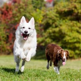 Glucosamin Til Hunde, Hvorfor Er Det Vigtigt?